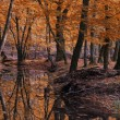 River in autumn forest — Stock Photo #34602107