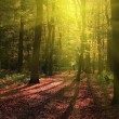 Autumn forest with ray of sunlight — Stockfoto