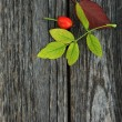 Autumnal background -  rosehip — Stock Photo