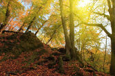 Autumn forest with ray of sunlight — Stock Photo