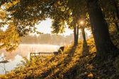 Scena d'autunno — Foto Stock