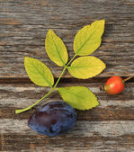 Autumnal background - Plum and rosehip — Stock Photo