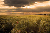 Ray of light over agricultural field — Stock Photo