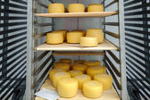 Cheese on shelves — Stock Photo