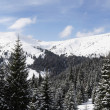 Carpathians in winter — Stock Photo #19568711