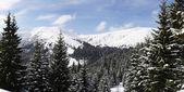Carpathians in winter — Stock Photo