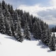 Winter Carpathians — Stock Photo