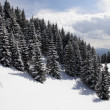 Stock Photo: Winter Carpathians