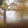 Fog in autumn beech forest — Stock Photo #22684477