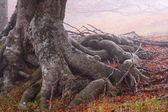 Fog in autumn beech forest — Stock Photo