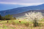Horses grazing in the valley. — Stock Photo
