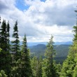 Summer Carpathian Mountains — Stock Photo