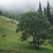 Horses on slopes of Carpathians — Stock Photo #31114963