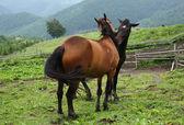 Two horses — Stock Photo