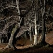 Night forest — Stock Photo #38953823