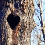 Tree with heart — Stock Photo