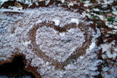 Heart on a frozen cut of of wood — Stock Photo