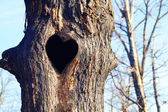Tree with heart — Stock Photo