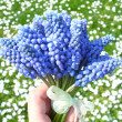 Nosegay - blue flower - Stock Photo