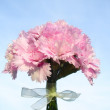 Nosegay - pink carnations - Stock Photo