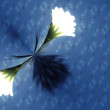Daisies - abstract composition - Stock Photo