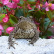 Royalty-Free Stock Photo: Toad on a background of flowers