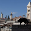 Stock Photo: Jerusalem black cat
