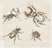 Sketches of beetles — Stock Vector