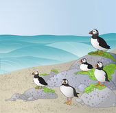 Puffins on the beach. — Stock Vector
