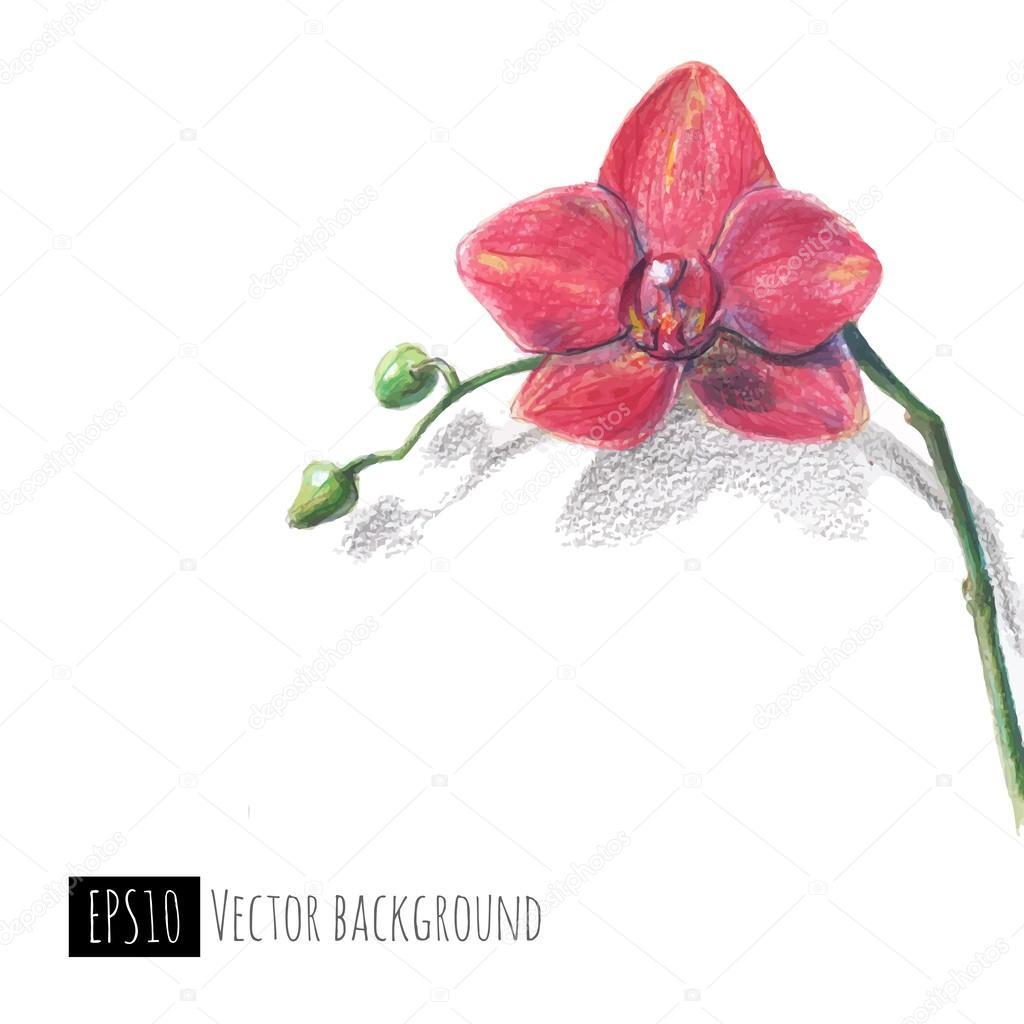 Orquídea mano dibujado con lápices de colores \u2014 Vector de stock 38858663