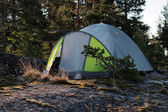 Tent in the pine forest — Stock Photo