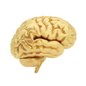 Golden brain isolated on a white background. — Stock Photo
