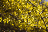 Blossoming bush — Stock Photo