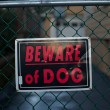Beware of dog - Stock Photo