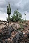 Gray sky desert landscape — Stock Photo