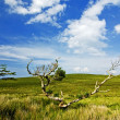 Stock Photo: Conamara landscape