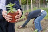 Plant gardening — Stock Photo