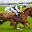 Лошадь гоночной движение blur — Стоковое фото