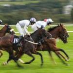 Скорость гонки лошади — Стоковое фото