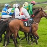 Pferde auf der Rennstrecke — Stockfoto