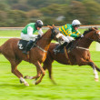 chevaux raceing — Photo