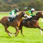 Pferde abgesetzt — Stockfoto