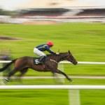 масштабирование лошадь гонки — Стоковое фото
