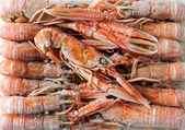Frozen shrimp — Stock Photo