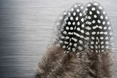 Guinea fowl feathers on brushed metal — Stock Photo