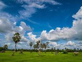 アジアでの青い空とフィールド — ストック写真