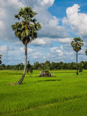 Field with blue sky in asia — Stock Photo