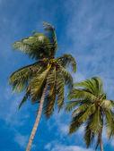 青い空とココナッツの木. — ストック写真