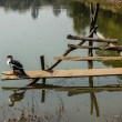 Stock Photo: Ducks on log in sun