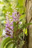Botanická, botanika, kytice, větev, světlé, bud, čisté, close-u — Stock fotografie